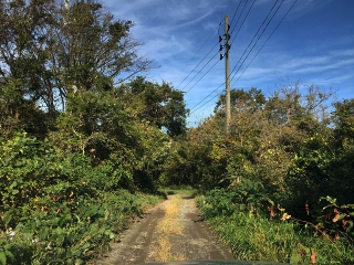 迷える森を脱出して道を開きたい!