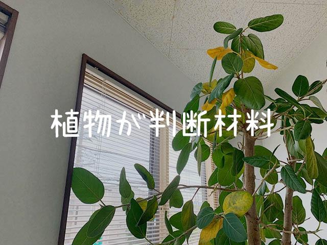 植物が調子を崩すってこういうことです